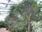 Grosspflanzenabteilung